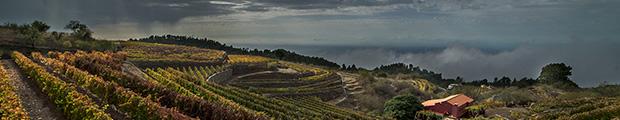 100 vinos imprescindibles de las Islas Canarias // CanariasCreativa.com